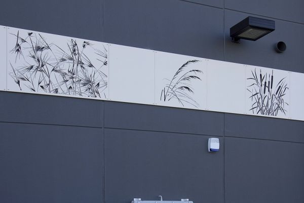 cutout-native-grasses-woolworths-panelling-schofields-nsw38083C383-6CBB-BC30-7B49-D23726D36BBC.jpg
