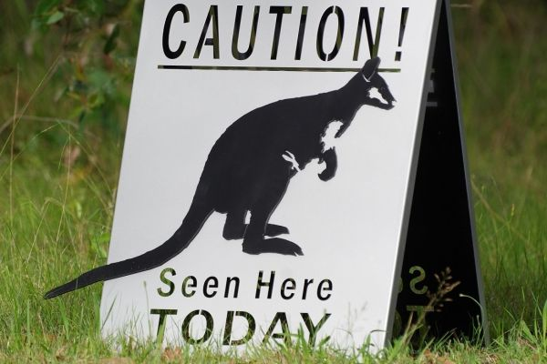 caution-wallabyE24B01A6-3959-EE15-7A97-2BA3E8687466.jpg