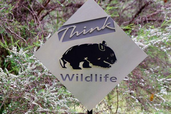 think-wildlifeB35CDBE6-FFED-F2F9-78BF-96C0382BD5BB.jpg